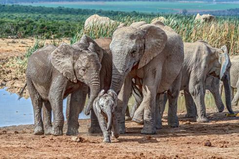 Safari im Addo Elephant Park