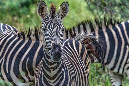 Amakhala Wildschutzgebiet in kleiner Gruppe