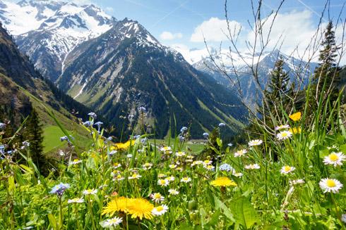 Blumenwiese Appenzeller Bergwelt