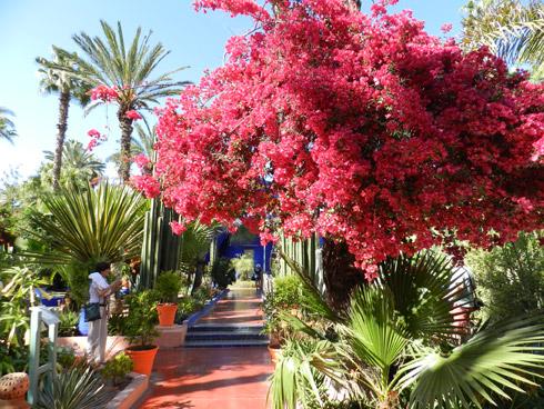 Pflanzenvielfalt aus aller Welt: Jardins-Majorelle-Garten
