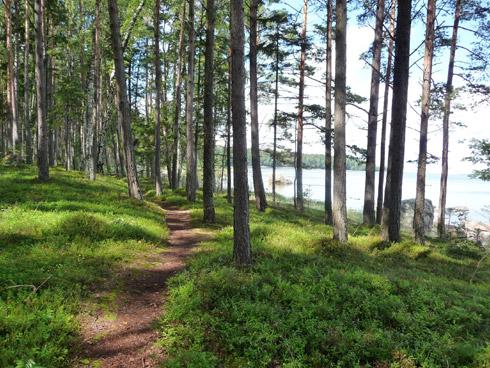 Spaziergang zur Gutmannshöhle in Lettland