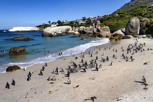 Pinguinkolonie nah des Kaps der Guten Hoffnung
