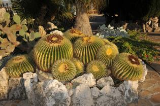 Blumenfarm bei Albenga