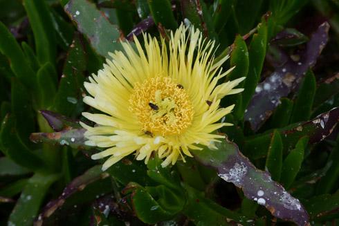Gardenroute- Blütentraum