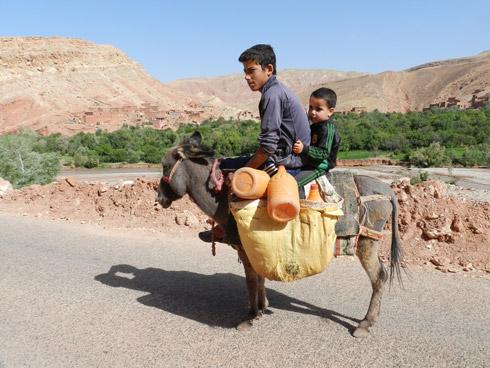 Der Esel, ein treuer Begleiter in Süd-Marokko