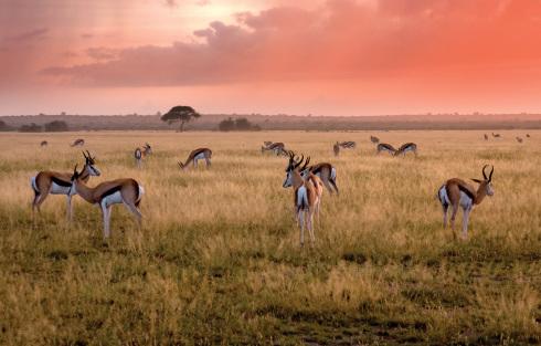 Botswana 1 Fremdenverkehrsamt 1