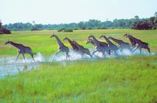Botswana mit Victoria Falls und Okavangodelta