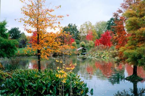 Herbstfärbung Arobertum darf genutzt werden