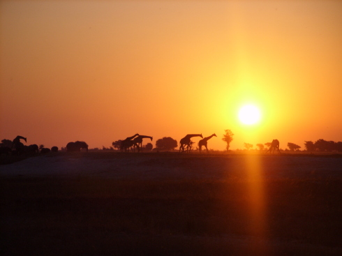 Papadi-GiraffeSunset_1