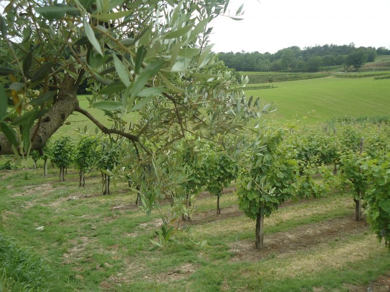 Chianti  Weinprobe in  kleiner Gruppe