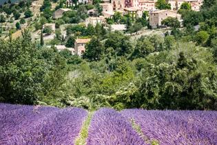 Südfrankreich – mit A-ROSA zur Lavendelblüte