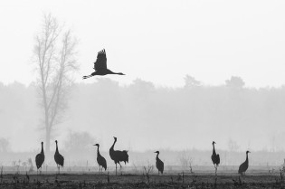 Havelland –Herbstzug der Kraniche und Vorlesung bei Herrn von Ribbeck