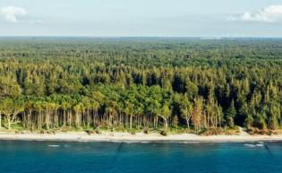 Küstenwald und Markgrafenheide